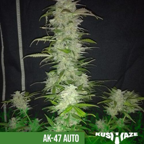 AK47 Auto